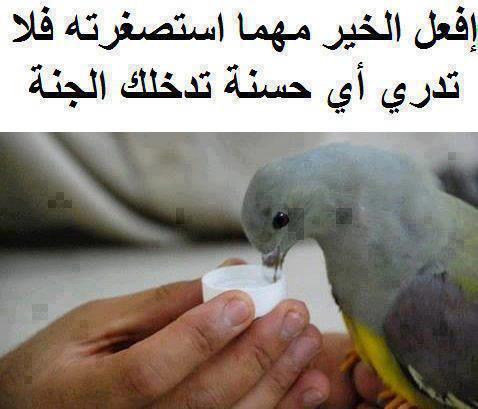 معلومات لازم كل مسلم يعرفها